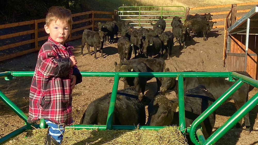 Little Cattle Rancher in Idaho