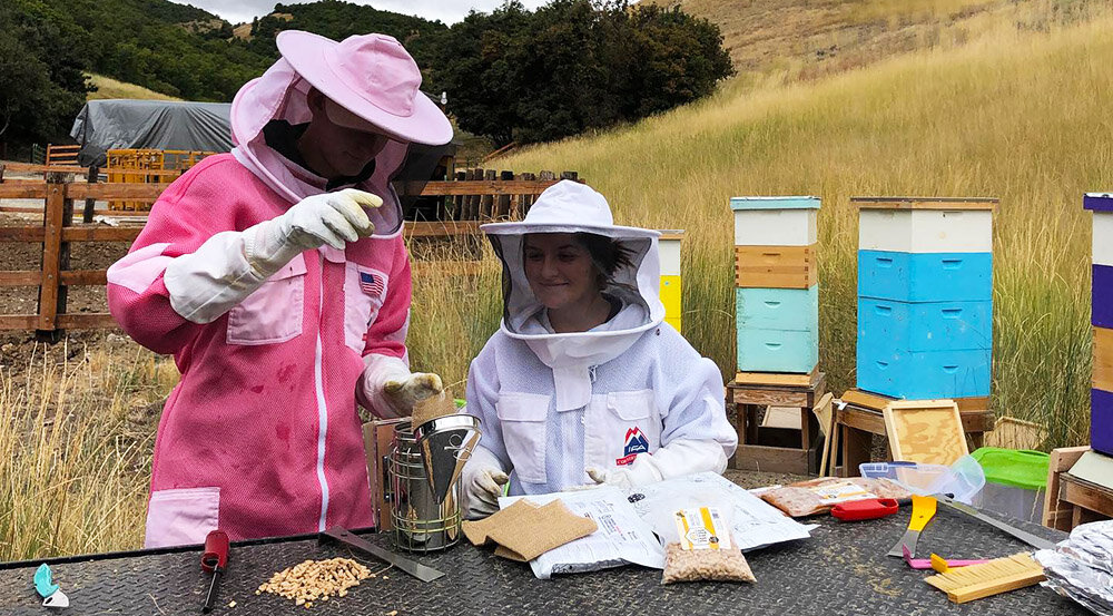 Beekeeping in Preston Idaho